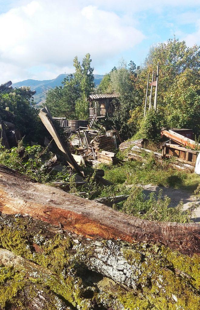 legno massello_grandi alberi_filiera legno